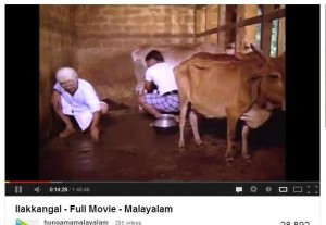 vechur cow with huge horn in Illakangal movie shot in 80's