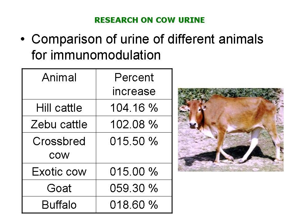 Western Breed and Indian Cow Urine Comparison