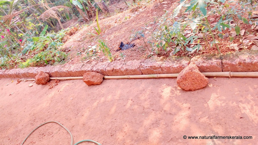Straighten Bamboo poles with just few heavy stones