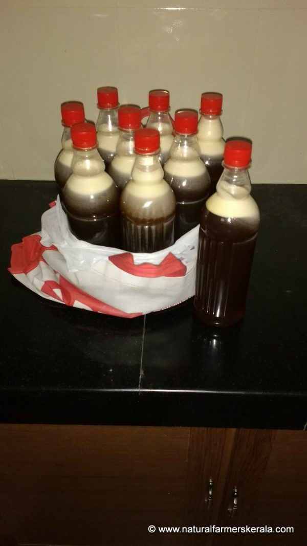 Forest Honey with Enzymes, yeast and micro-organism