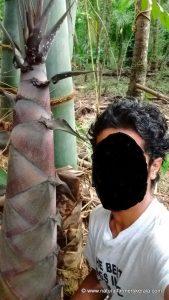 Big size bamboo shoots