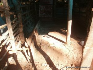 cow shelter with mud floor