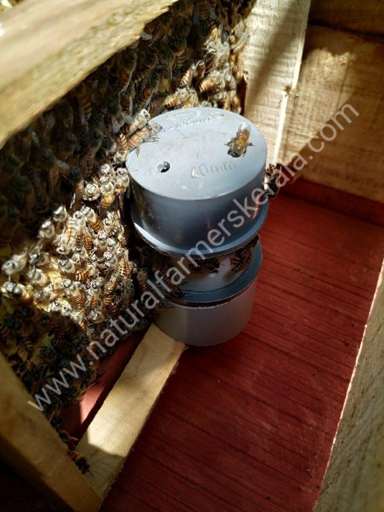 Worker Bee seen entering the queen bee cell's module